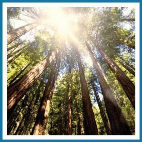 tannic acid sequoia